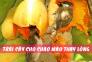 9loạitrái cây tốt cho quá trình thay lông