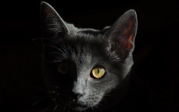 Bệnh dại ở Mèo - Bạn cần phải biết