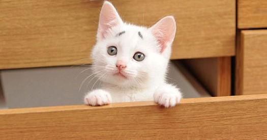 Cách nuôi dưỡng mèo con đúng cách