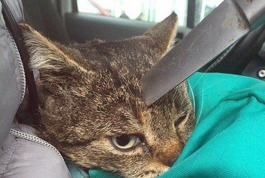 Dấu hiệu cần đưa Mèo đi cấp cứu ngay