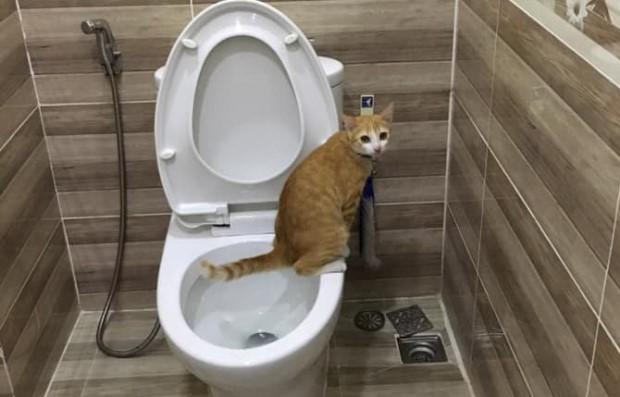 Mèo bị tiêu chảy